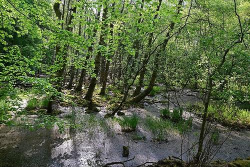 Muritz National Park