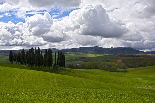 I cipressi di San Quirico d'Orcia