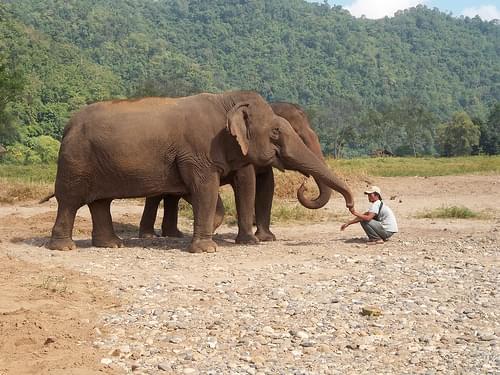 Thailand: Elephant Nature Park