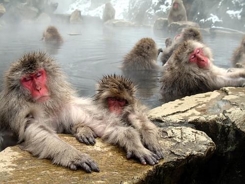 Japan 日本 1974-2009 — Jigokudani Monkey Park 地獄谷野猿公苑  32