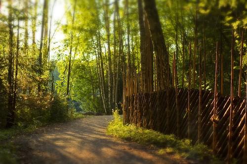 Path to Pitkäkoski - I