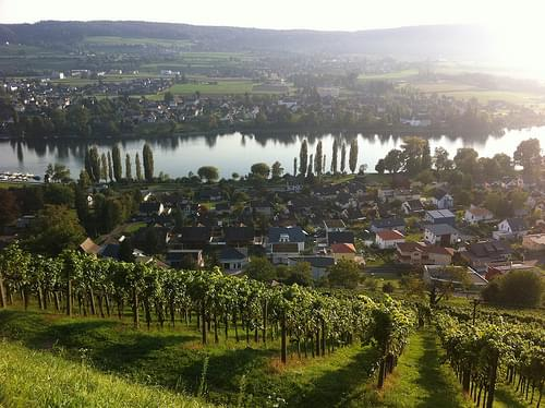 Vineyards above Stein am Rhein, Switzerland