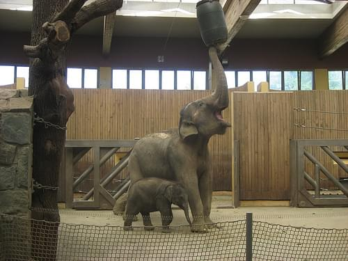Zoo Ostrava, rashmi & JOHTI :-)