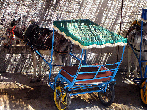 Donkey taxi, Mijas, Andalucia