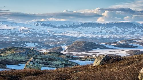Hardangervidda. Juni 2015.
