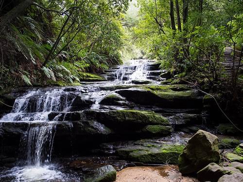 Leura Cascades: Green
