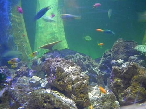 Sea Life Aquarium, Bray