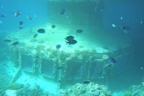 Coral World Underwater Observatory and Aquarium, Eilat