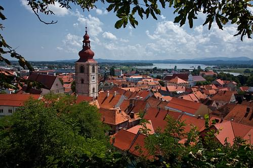 Ptuj roof tops
