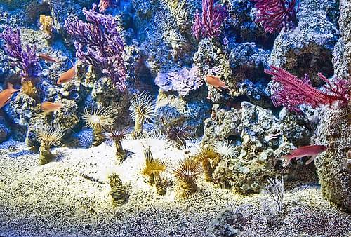 Genoa Aquarium 8