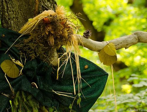'Rusalii' in Hoia-Baciu Forest