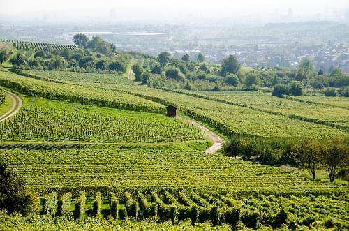 Badische Wine Road