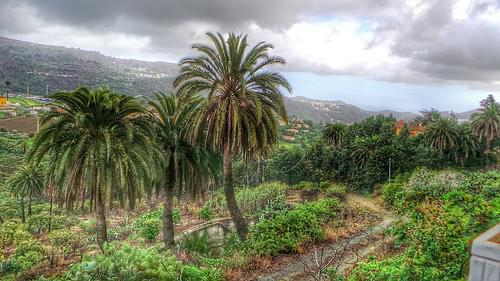 La Villa de Santa Brigida y El Palmeral de Satautey