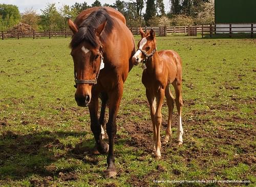 Mare and foal at Irish National Stud