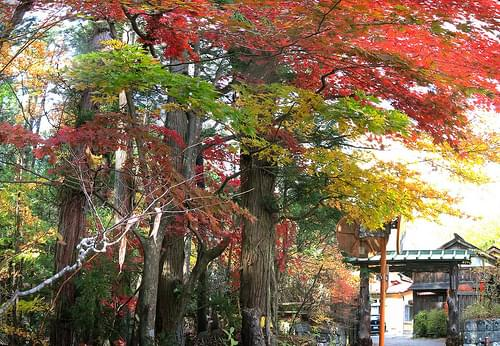 Nikko National Park 15