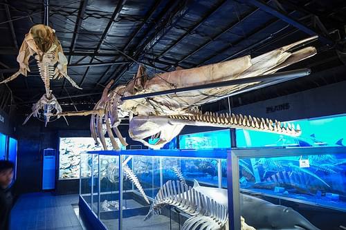 D' Bone Collector Museum Inc., Davao City, Philippines