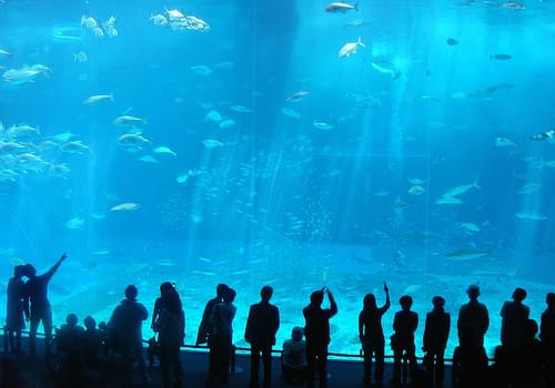 20050314 Okinawa-Churaumi Aquarium 037
