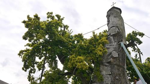 France, Allouville-Bellefosse, le chêne pédonculé dont l'âge est estimé à 1200 ans et qui abrite deux chapelles