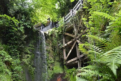 Looking up through Shanklin Chine