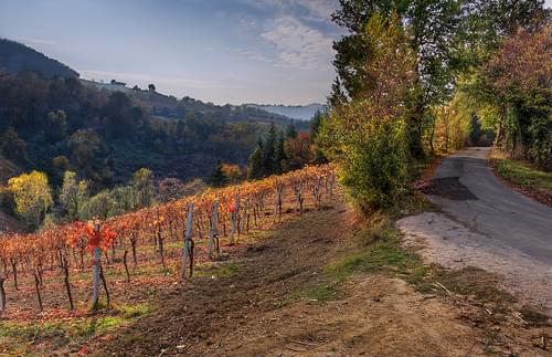 vineyards in the hills in autumn