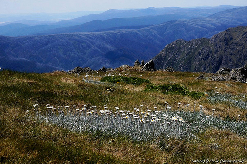 Alpine meadow and blue mountains (Lady Northcotes canyon)