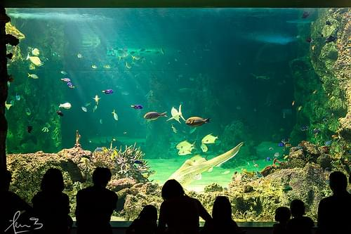 Sea Life Sydney Aquarium - Darling Harbour