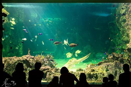 Sea Life Sydney Aquarium - Darling Harbour