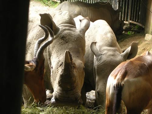Taiping Zoo IMG_6040