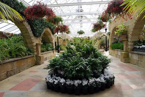 Conservatory fernery