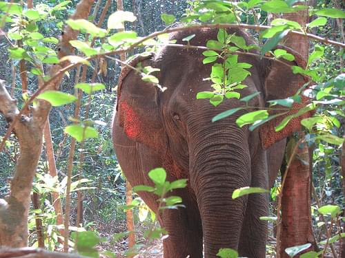 Elephant Valley Project, Mondulkiri Province