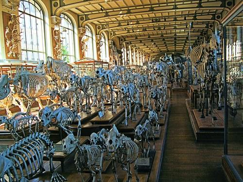 Inside The Of Gallery Comparative Anatomy - Paris.