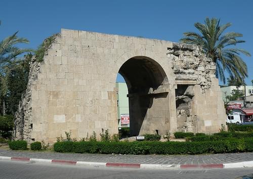 035S Tarsus