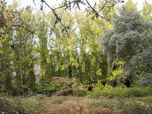 Choperas (Sierra de Aracena y Picos de Aroche, Huelva)