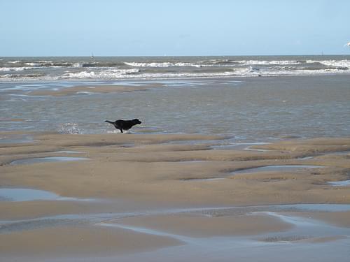 seagullhunt