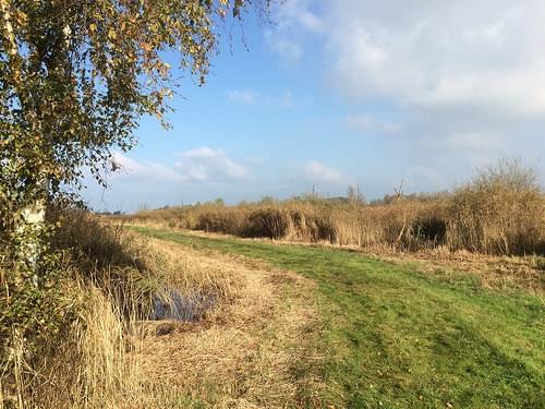 2016-10 Herfstvakantie Schiermonnikoog wandeling Alde Feanen (4)