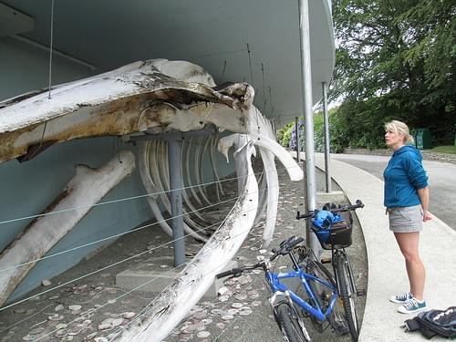 Whale of Kilbrittain
