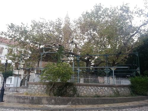 Plane Tree of Hippocrates, Kos, Greece