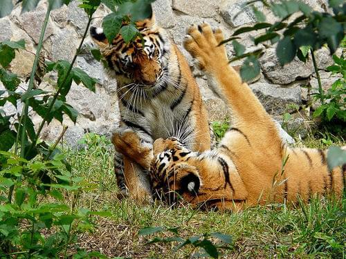 Kiev Zoo
