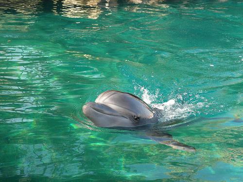 Eilat reef dolphin