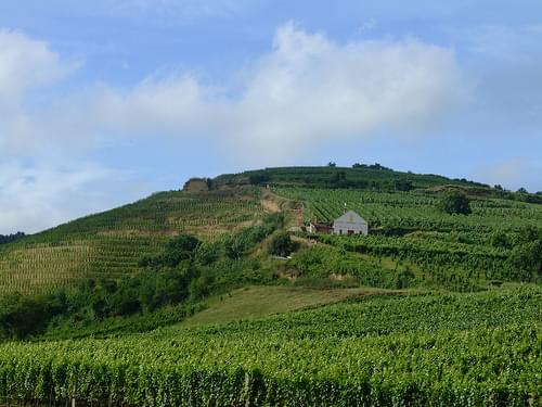 Tokaj vineyards