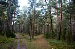 Curonian Spit - Neringa - 179