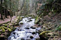 Black Forest v