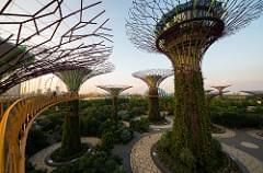 the trees III (Singapore)