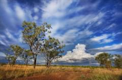 'A Looming Threat', Australia, The Outback, Pine Creek