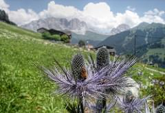 Busy bee in Swiss Alps