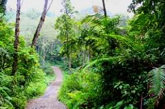DSC00350/Java East/Ijen Tableland/Trail to Volcano Kawah Ijen
