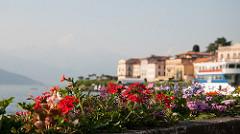 Bellagio View