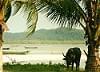 Cambodia - Sihanoukville - Ream National Park