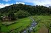 Landscape of Mount Halimun Salak National Park, West Java