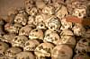 Skulls in the Hallstatt Bone Chapel